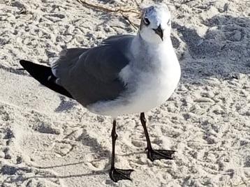 180207_Pine Island Beach Park_039-a
