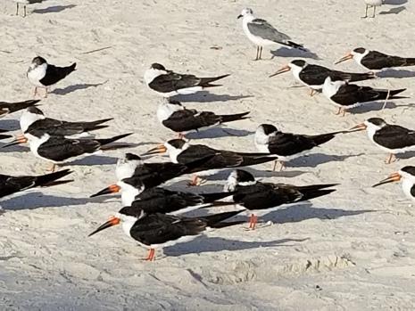 180207_Pine Island Beach Park_056