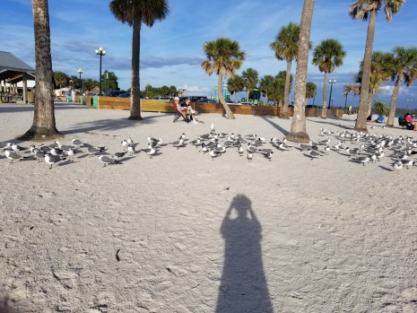 180207_Pine Island Beach Park_063